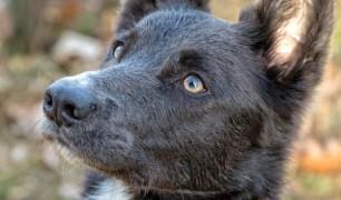 hondenshoot nike 299 bewerkt
